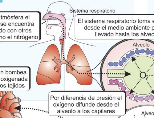 Consumo de Oxígeno