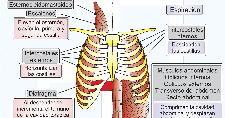 Infografía-Microbioma-Intestinal-y-Ejercicio